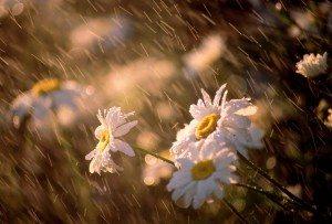 pioggia primaverile